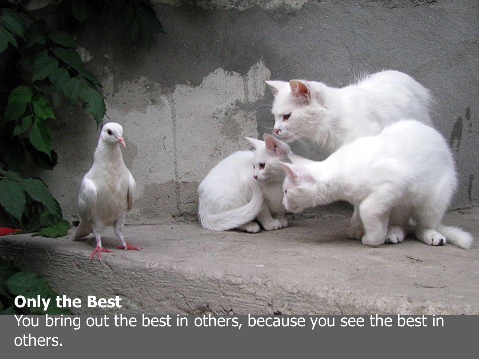 Only the Best You bring out the best in others, because you see the best in others.