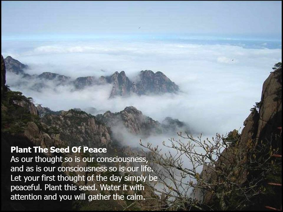 Plant The Seed Of Peace As our thought so is our consciousness, and as is our consciousness so is our life.