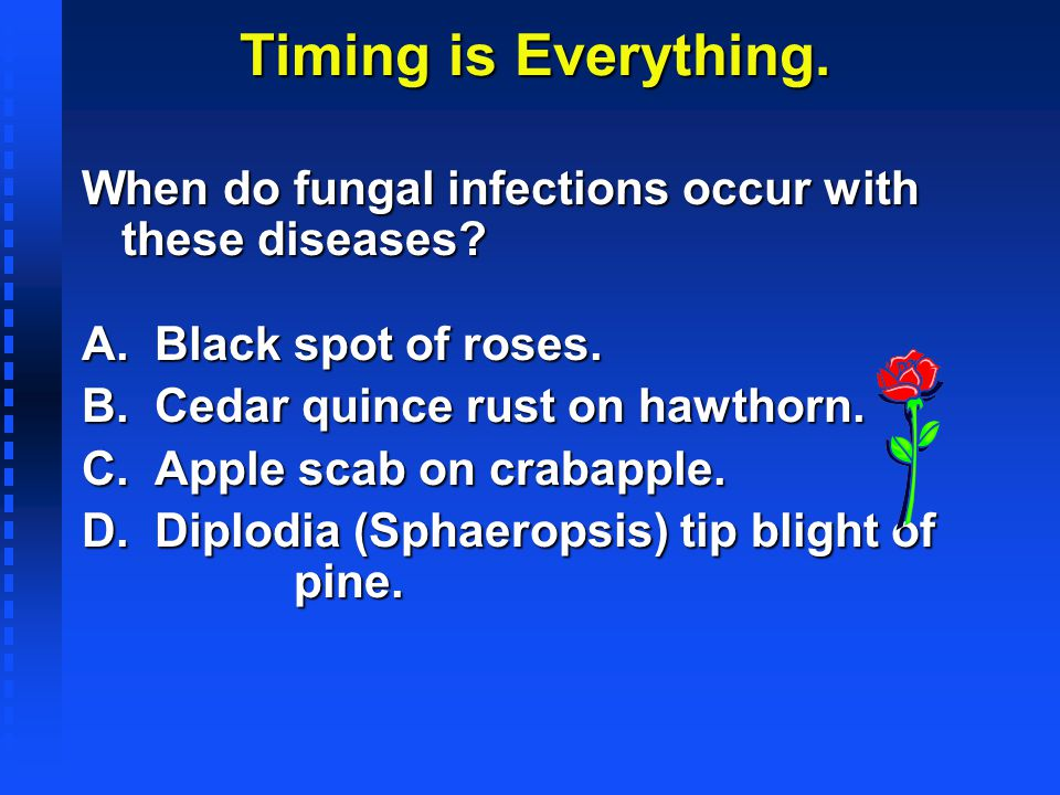 Timing is Everything. When do fungal infections occur with these diseases A. Black spot of roses.