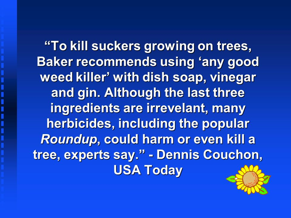 To kill suckers growing on trees, Baker recommends using 'any good weed killer' with dish soap, vinegar and gin.