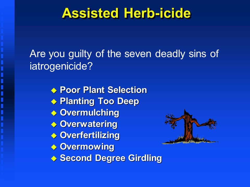 Assisted Herb-icide Are you guilty of the seven deadly sins of iatrogenicide Poor Plant Selection.
