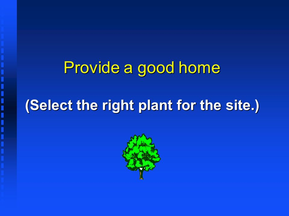 Provide a good home (Select the right plant for the site.)