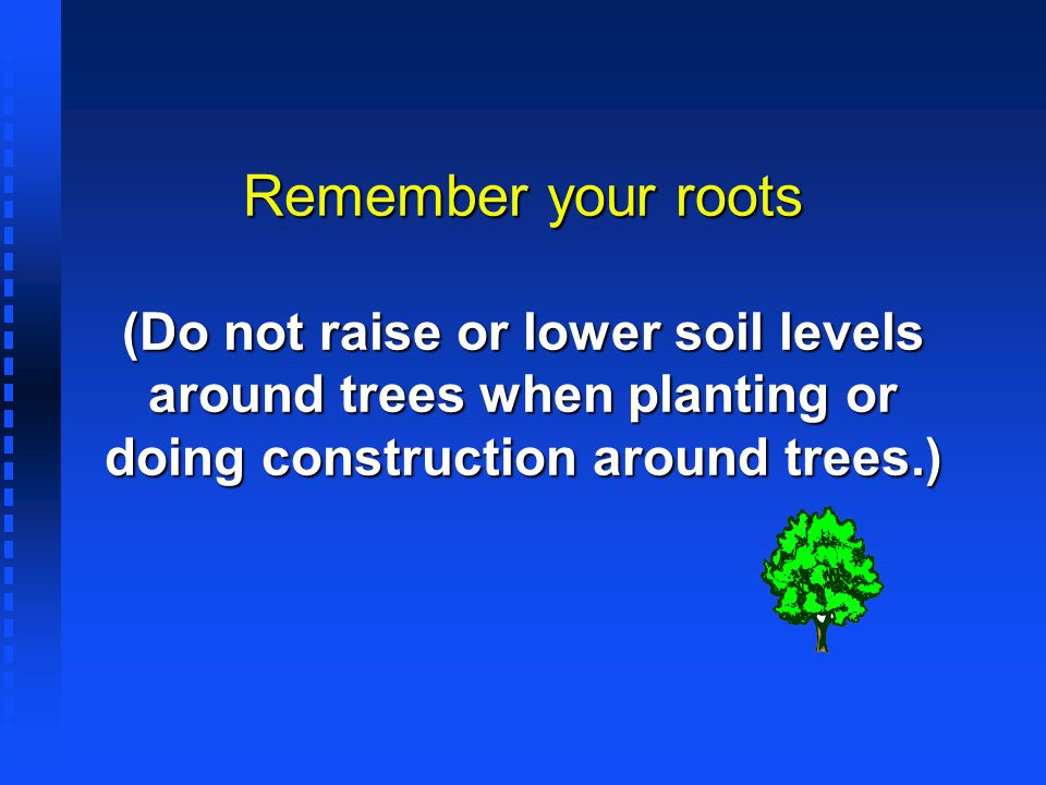 Remember your roots (Do not raise or lower soil levels around trees when planting or doing construction around trees.)