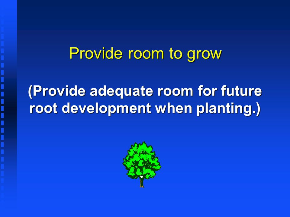 Provide room to grow (Provide adequate room for future root development when planting.)