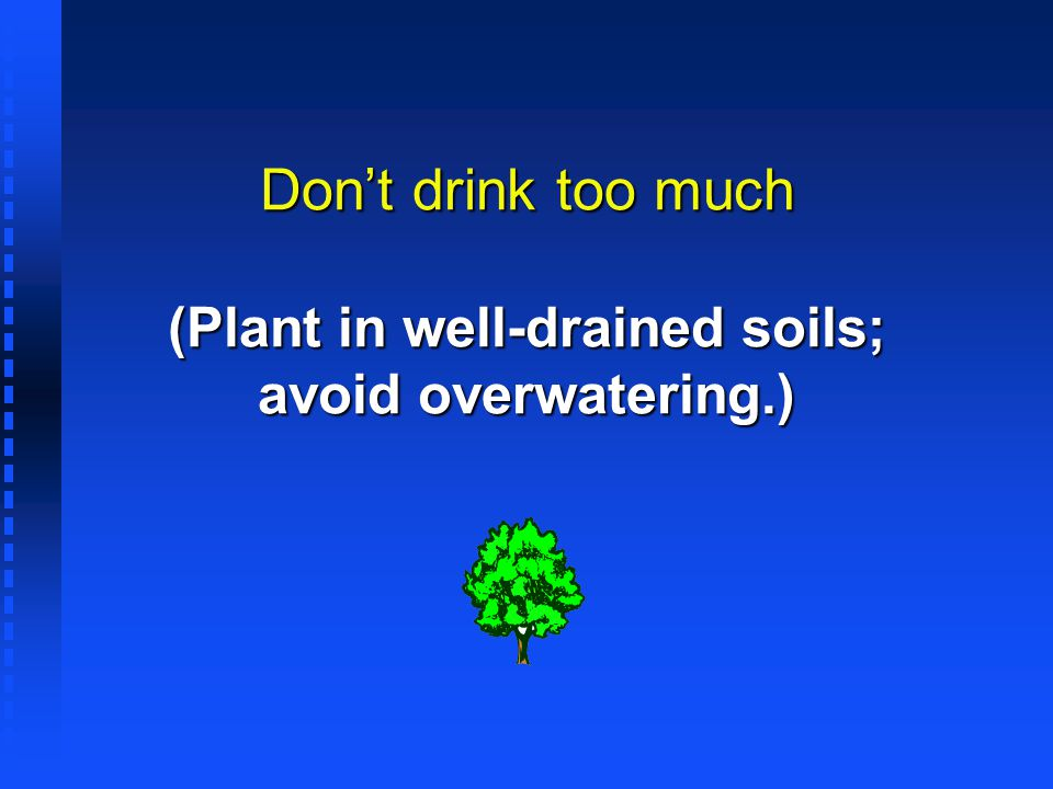 Don't drink too much (Plant in well-drained soils; avoid overwatering