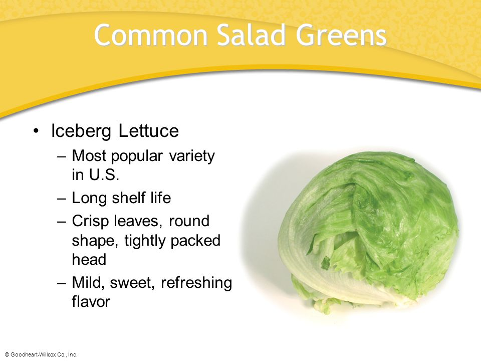 Common Salad Greens Iceberg Lettuce Most popular variety in U.S.