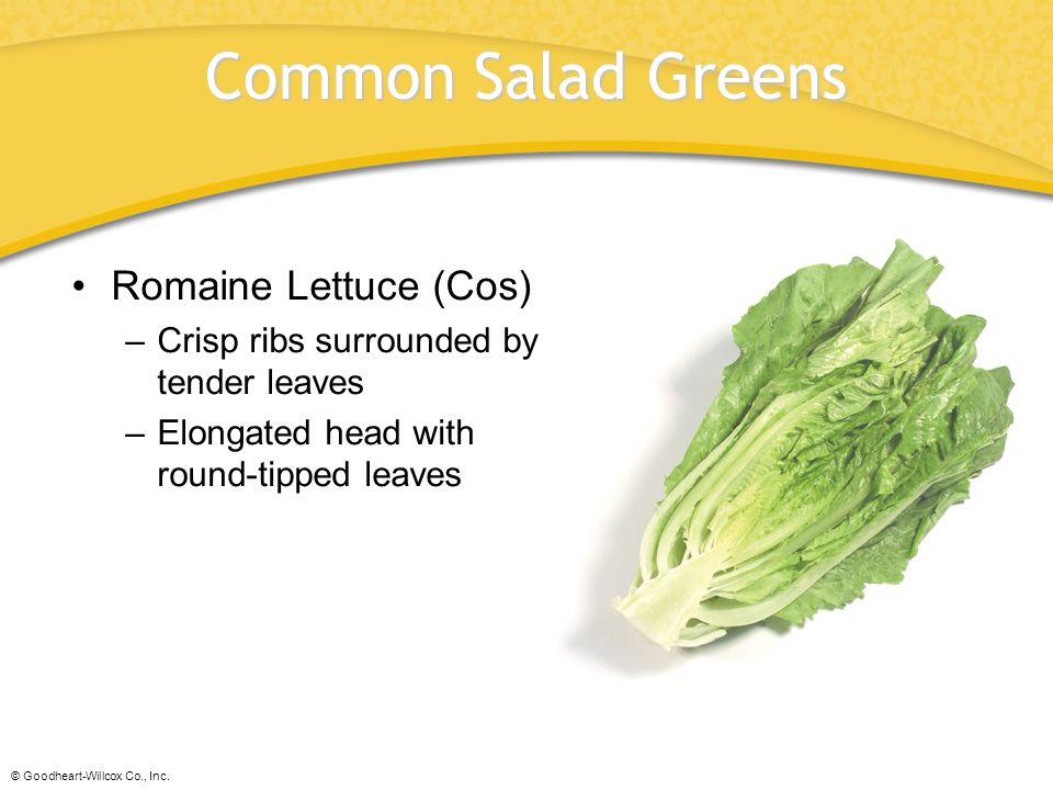 Common Salad Greens Romaine Lettuce (Cos)