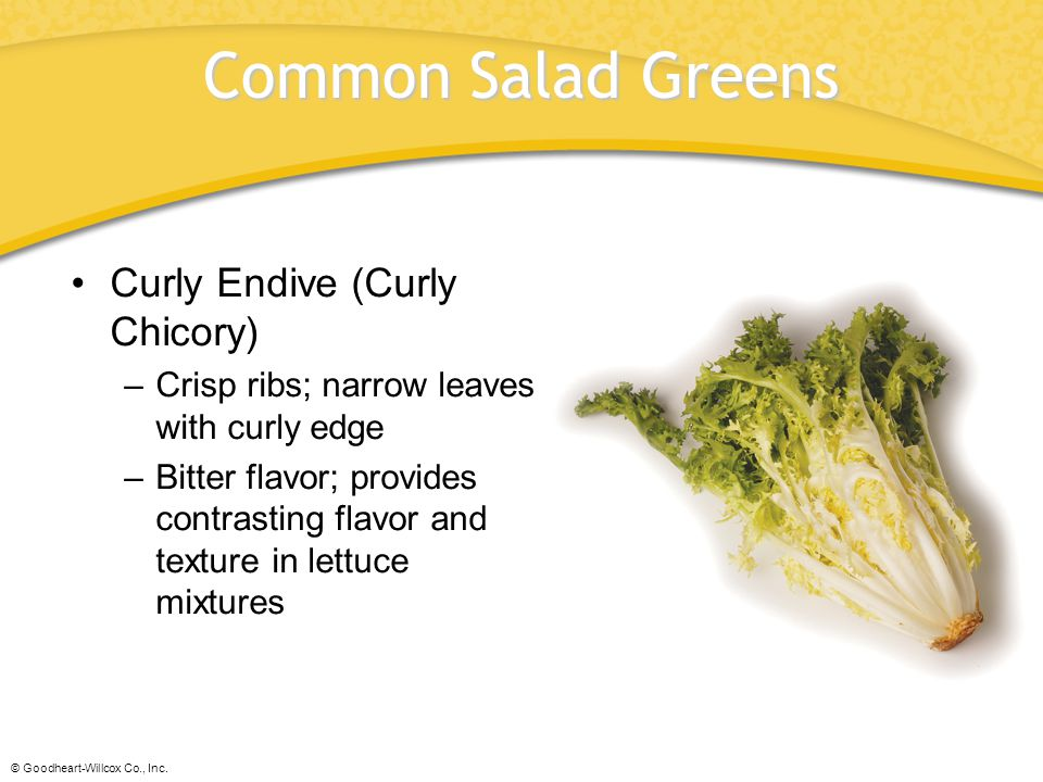Common Salad Greens Curly Endive (Curly Chicory)