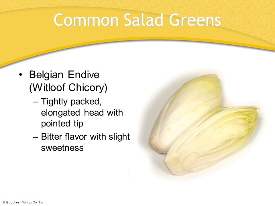 Common Salad Greens Belgian Endive (Witloof Chicory)