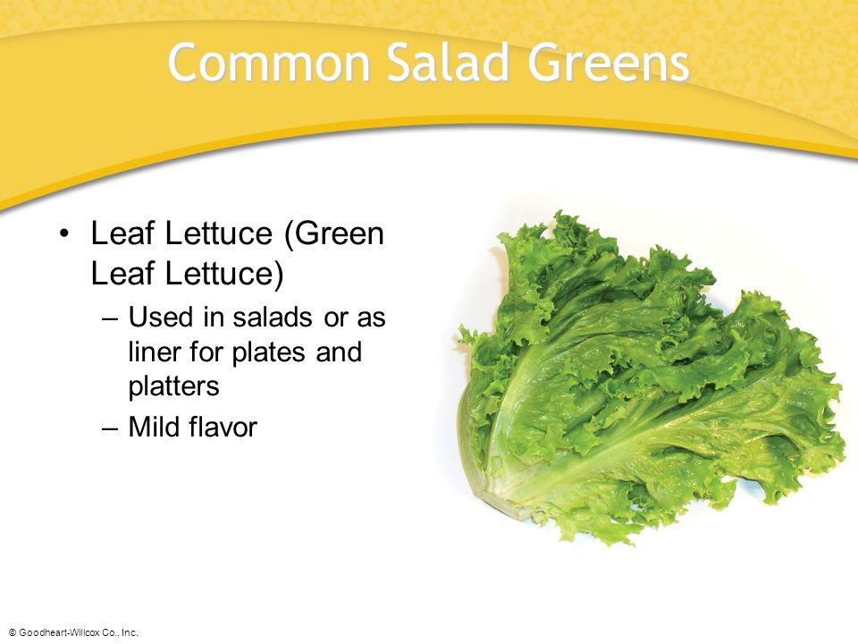 Common Salad Greens Leaf Lettuce (Green Leaf Lettuce)