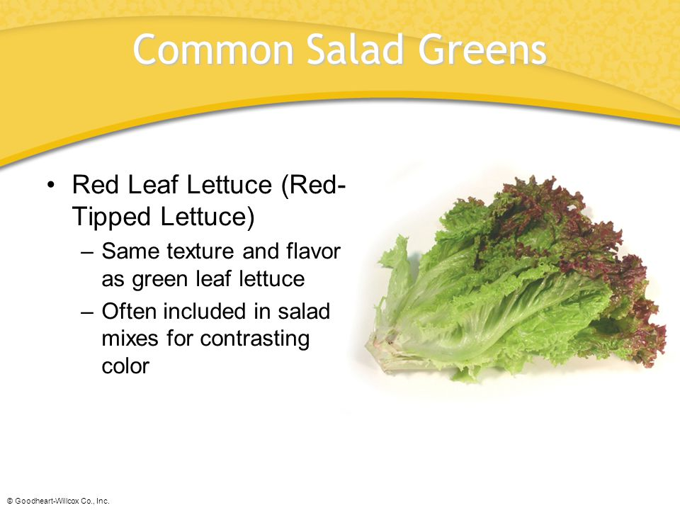 Common Salad Greens Red Leaf Lettuce (Red-Tipped Lettuce)