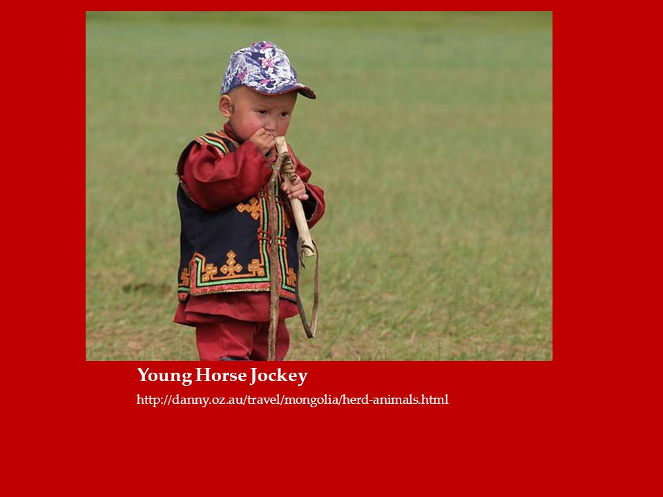 Young Horse Jockey http://danny.oz.au/travel/mongolia/herd-animals.html