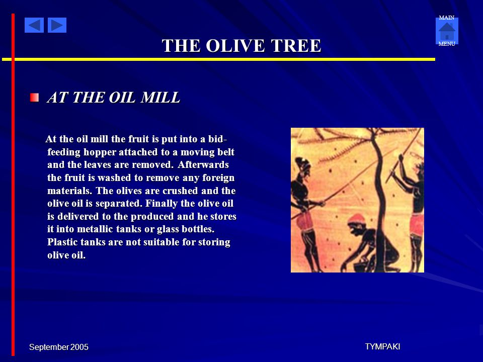 THE OLIVE TREE AT THE OIL MILL