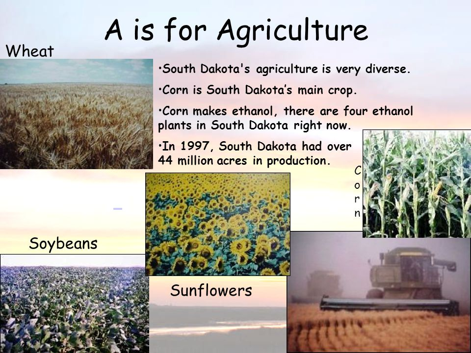 A is for Agriculture A is for Agriculture Wheat Soybeans Sunflowers