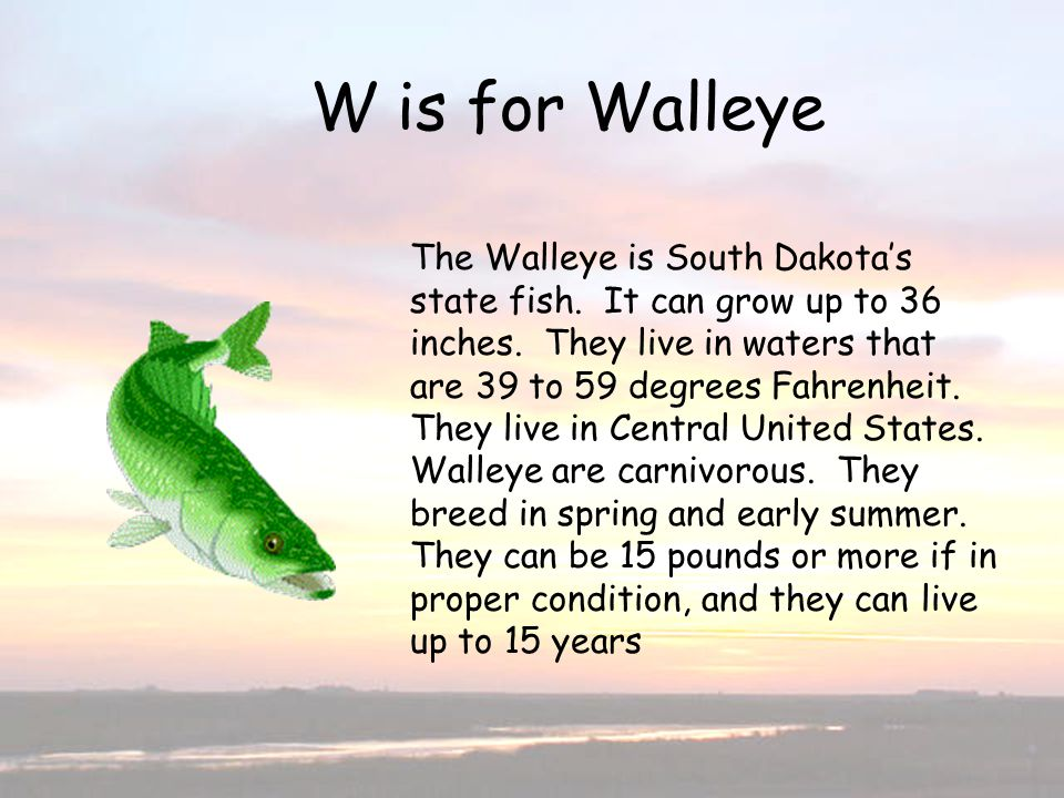 W is for Walleye W is for Walleye