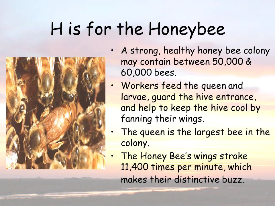 H is for the Honeybee H is for the Honeybee