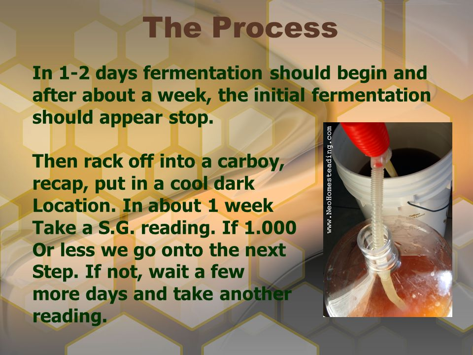 The Process In 1-2 days fermentation should begin and after about a week, the initial fermentation should appear stop.
