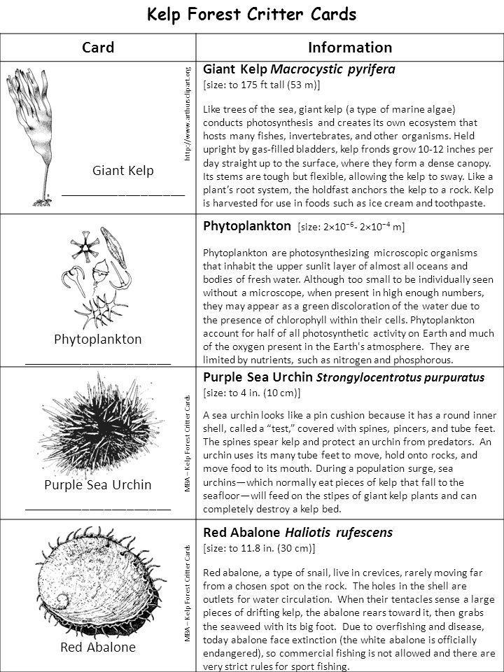 Giant Kelp Macrocystic pyrifera
