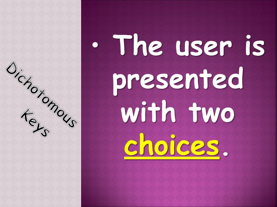 The user is presented with two choices.