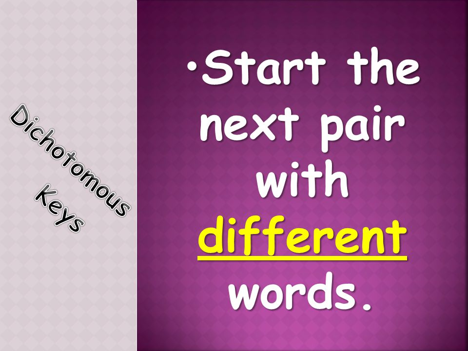 Start the next pair with different words.