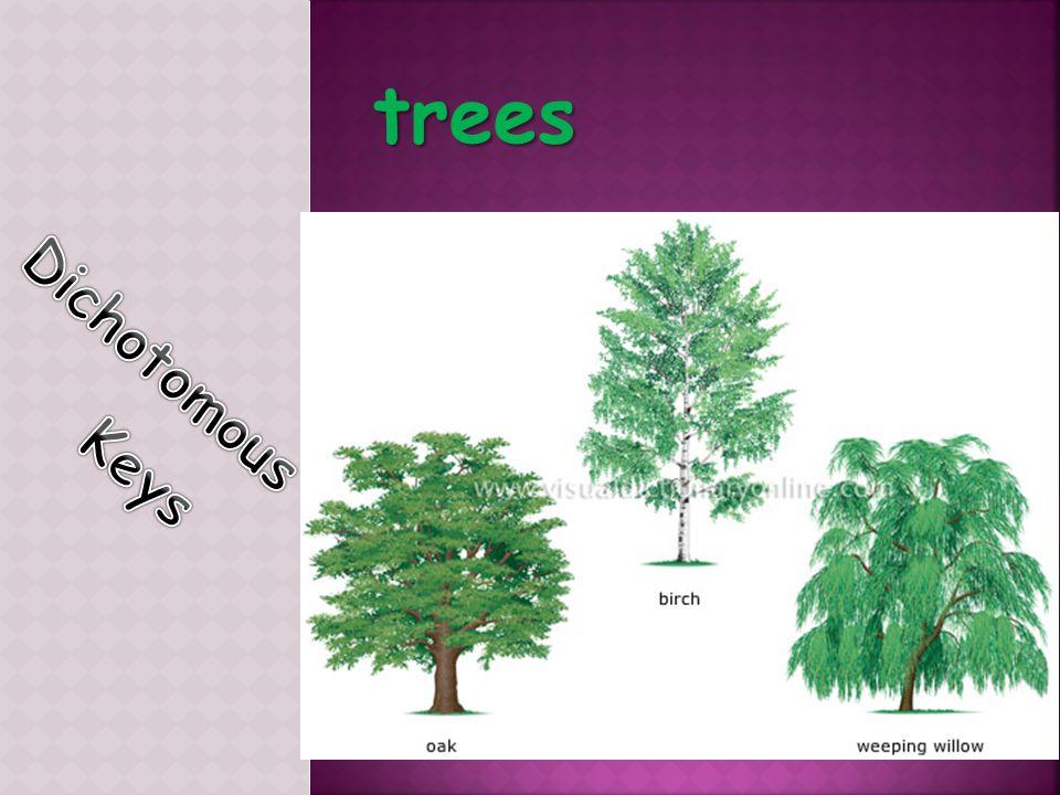 trees Dichotomous Keys