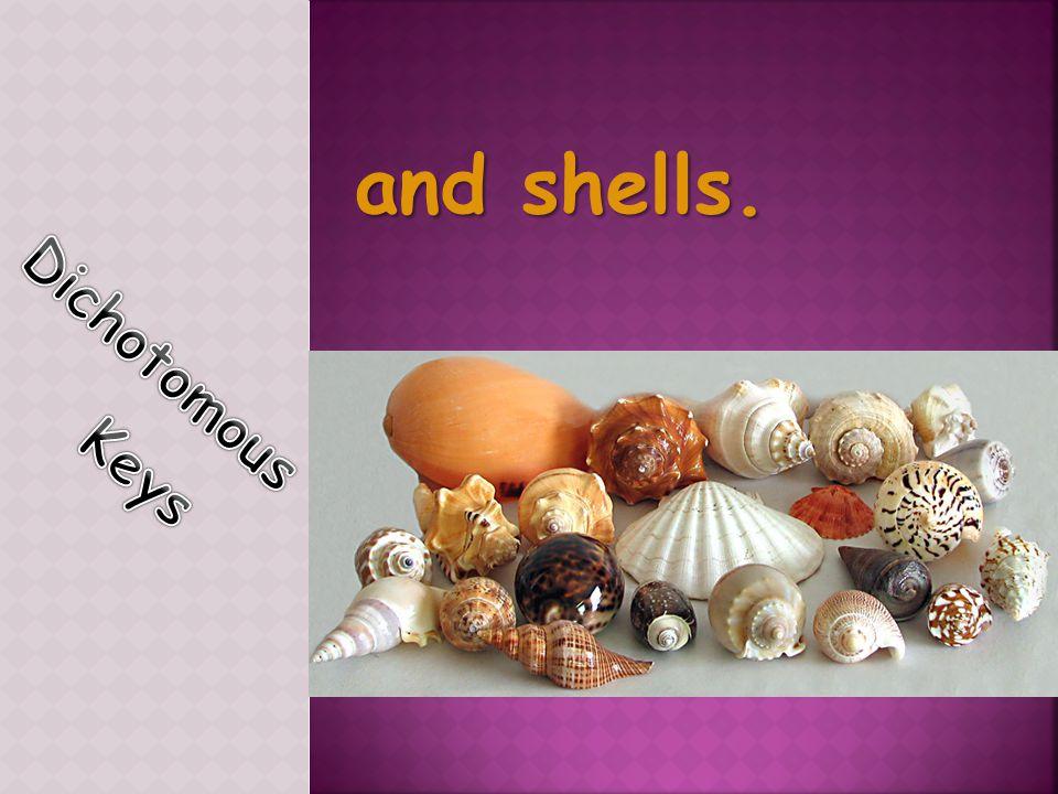 and shells. Dichotomous Keys