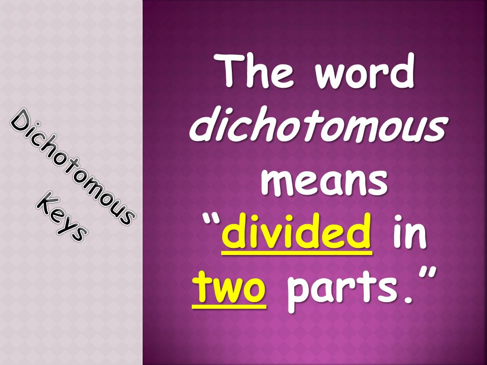 The word dichotomous means divided in two parts.