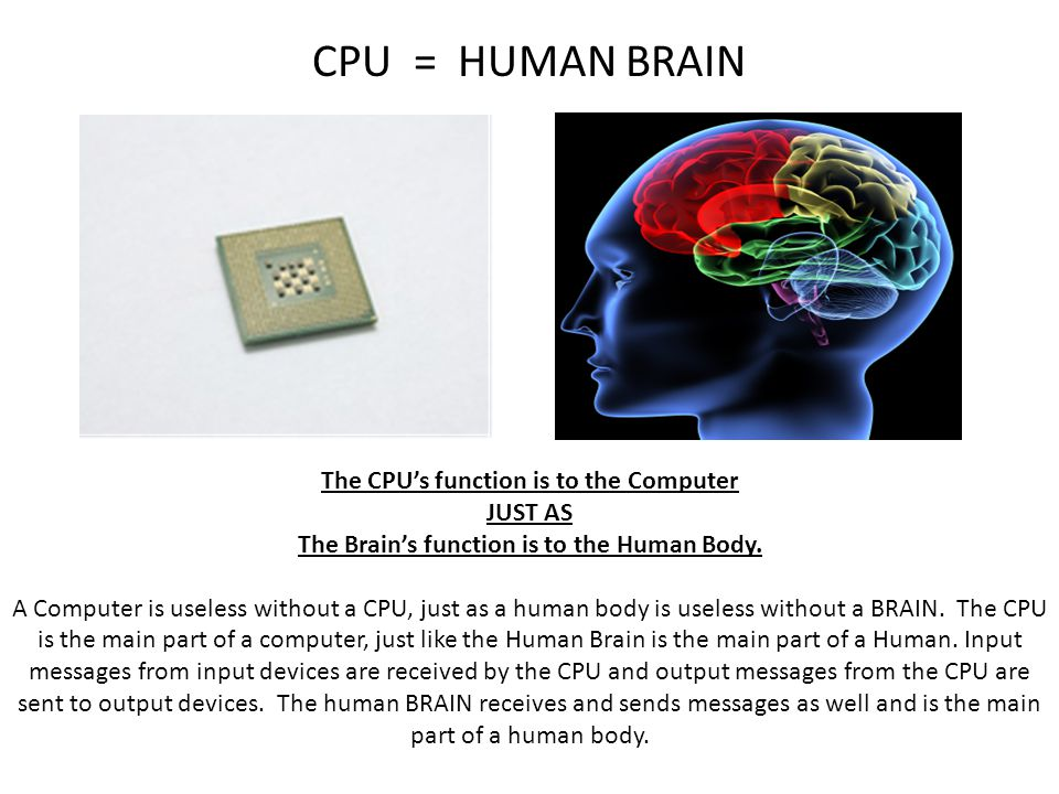 CPU = HUMAN BRAIN The CPU's function is to the Computer JUST AS