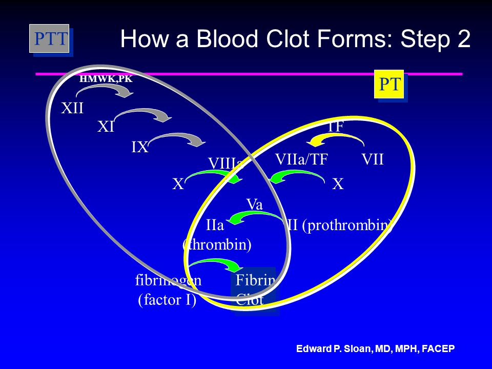 How a Blood Clot Forms: Step 2
