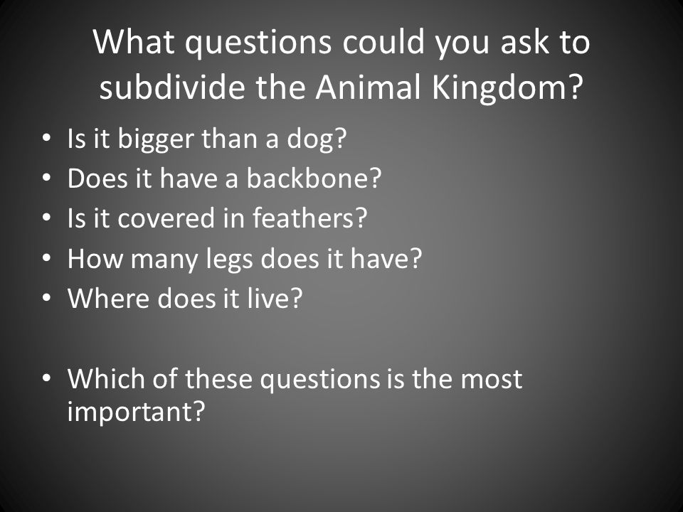 What questions could you ask to subdivide the Animal Kingdom