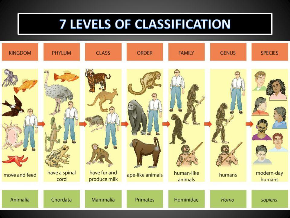 7 LEVELS OF CLASSIFICATION