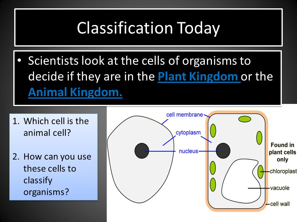 Classification Today Scientists look at the cells of organisms to decide if they are in the Plant Kingdom or the Animal Kingdom.