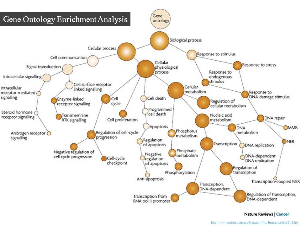 Gene Ontology Enrichment Analysis