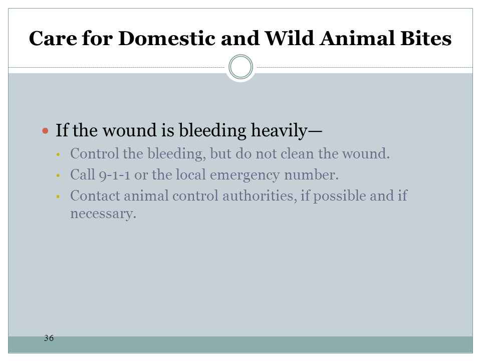 Care for Domestic and Wild Animal Bites