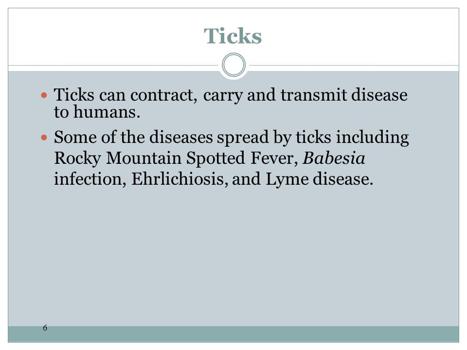 Ticks Ticks can contract, carry and transmit disease to humans.