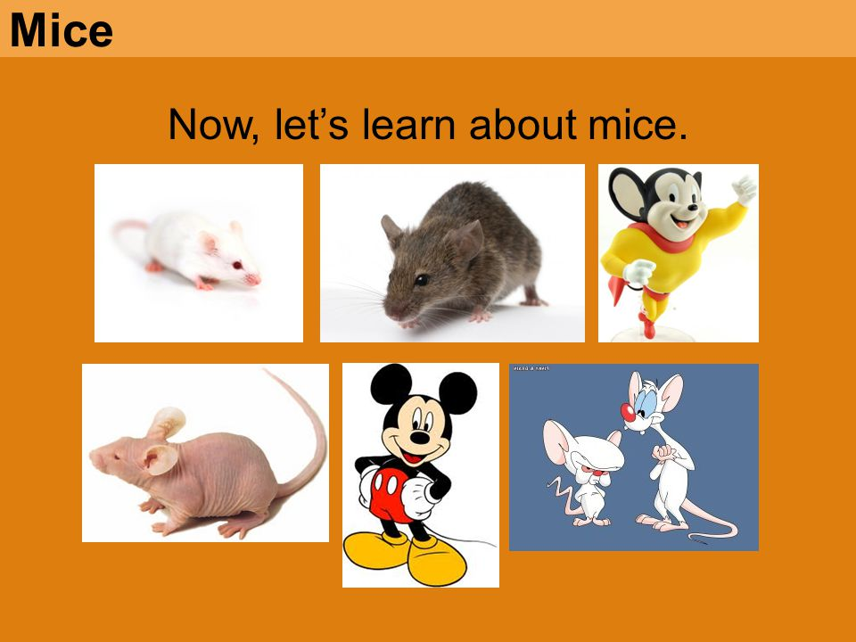 Now, let's learn about mice.