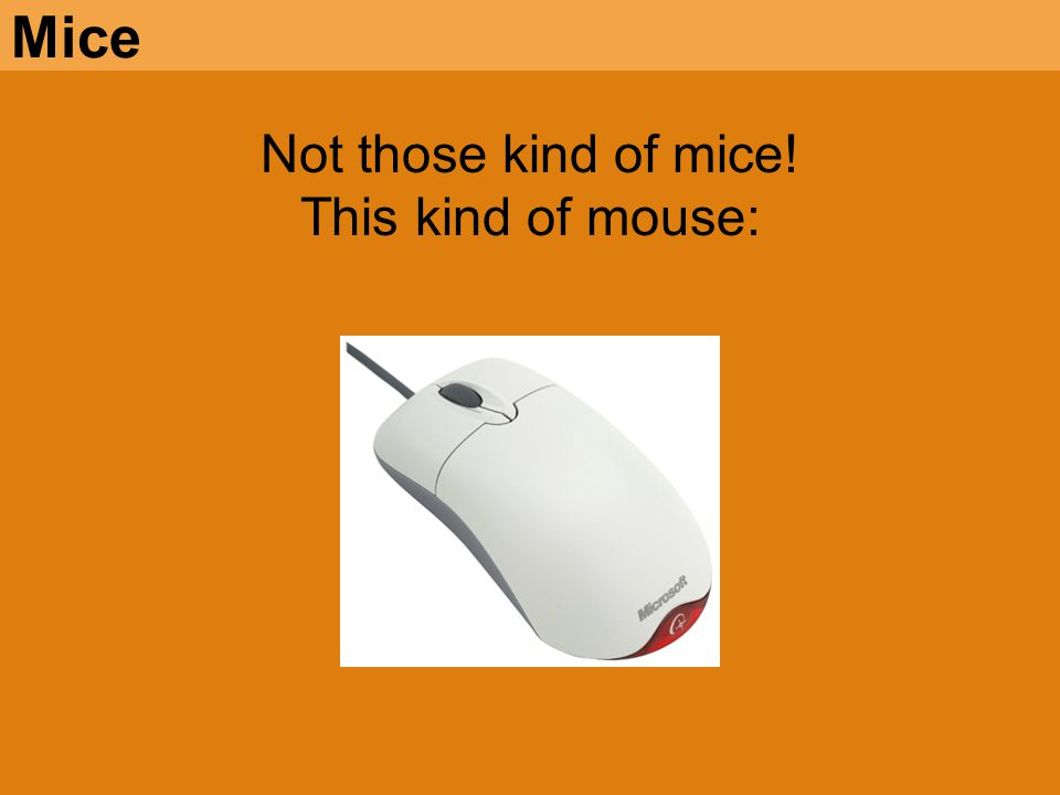 Mice Not those kind of mice! This kind of mouse: