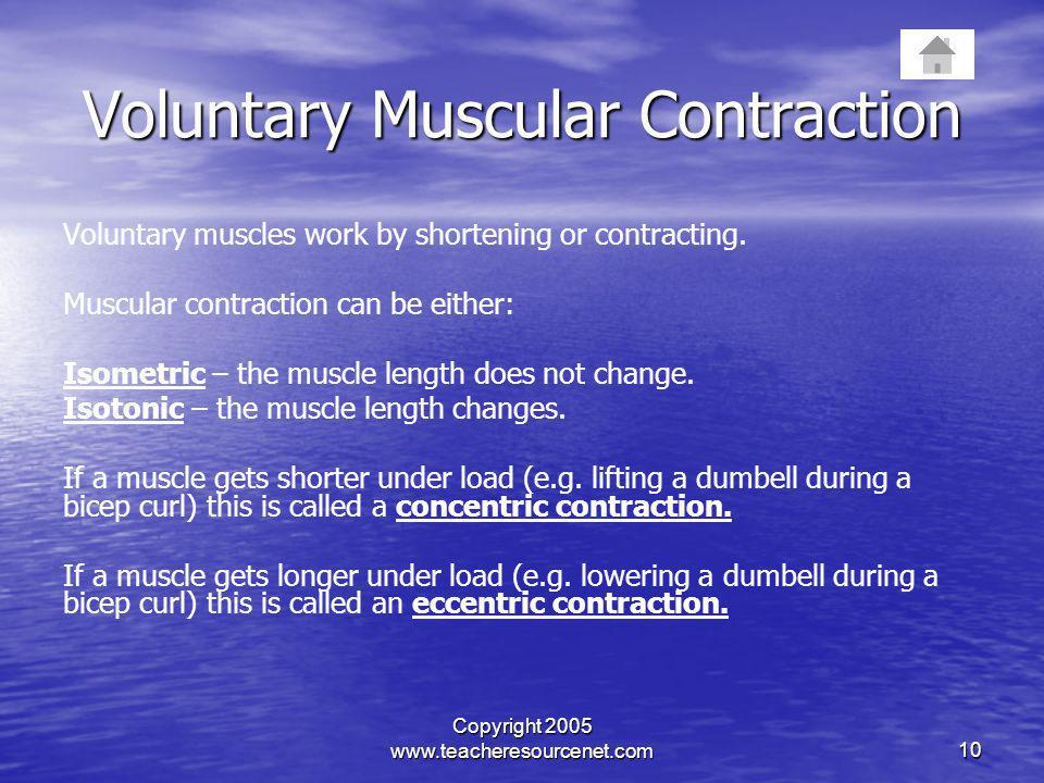Voluntary Muscular Contraction