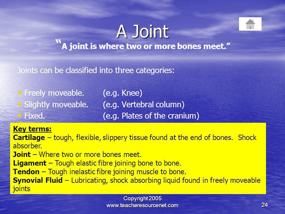 A joint is where two or more bones meet.