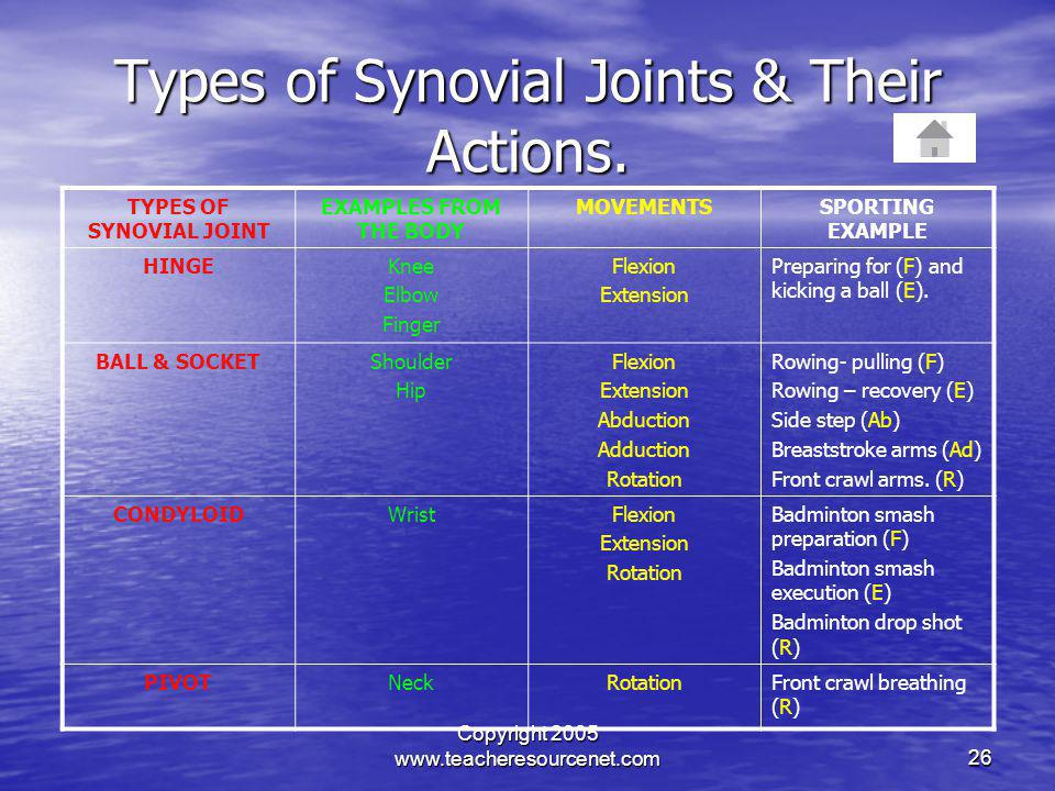 Types of Synovial Joints & Their Actions.
