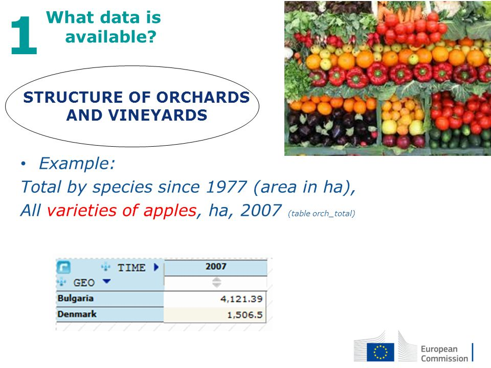 STRUCTURE OF ORCHARDS AND VINEYARDS