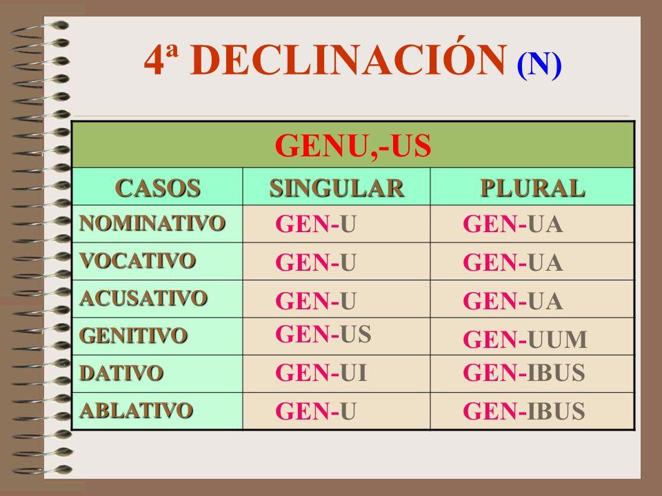 4ª DECLINACIÓN (N) GENU,-US CASOS SINGULAR PLURAL GEN-U GEN-UA GEN-U