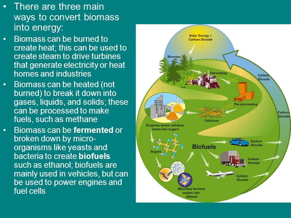 There are three main ways to convert biomass into energy: