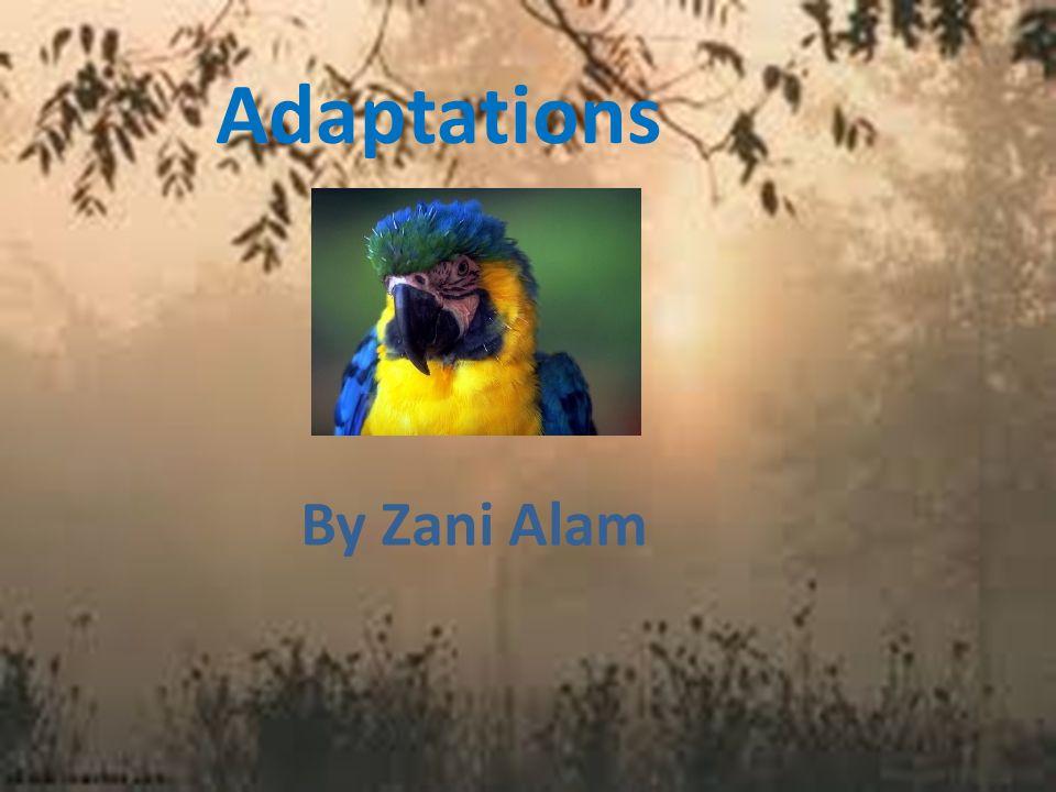 Adaptations By Zani Alam