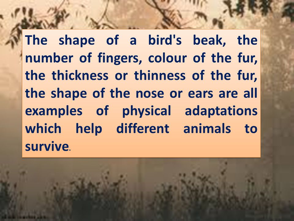The shape of a bird s beak, the number of fingers, colour of the fur, the thickness or thinness of the fur, the shape of the nose or ears are all examples of physical adaptations which help different animals to survive.