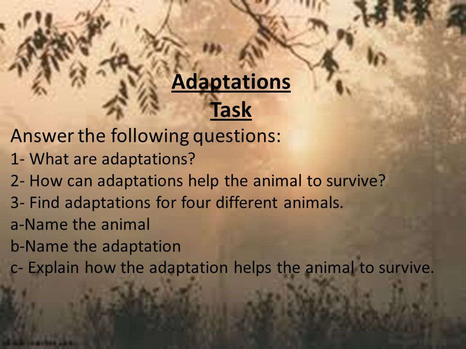Adaptations Task Answer the following questions: