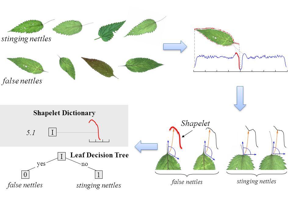 stinging nettles false nettles Shapelet Shapelet Dictionary 5.1 I