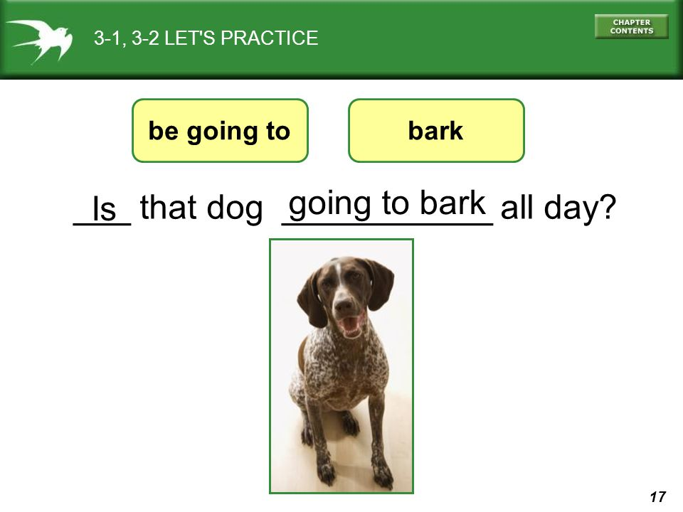 ___ that dog ___________ all day Is