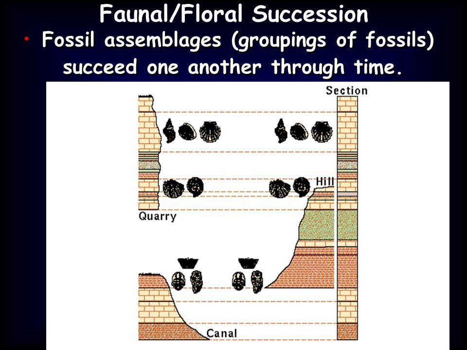 Faunal/Floral Succession