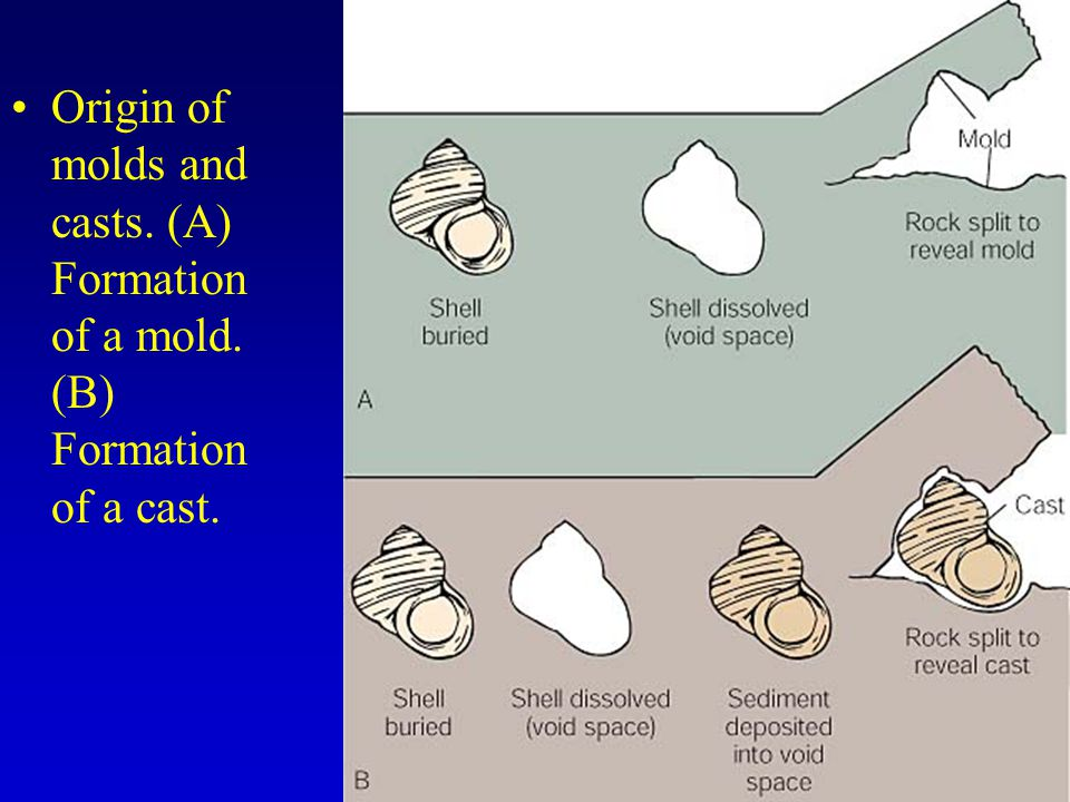 Origin of molds and casts. (A) Formation of a mold